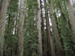 Montgomery Woods Inspiration/Image Collection Exhibition