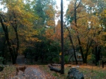 The gorgeous colors of Fall on the mountain!